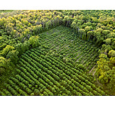 Forest, Forestry, Trees, Reforestation