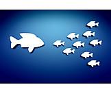 School Of Fish, Fish