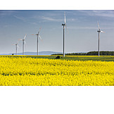 Rape Field, Alternative Energy, Wind Turbines