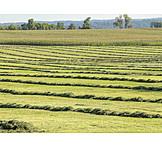 Meadow, Mowed, Hay Harvest
