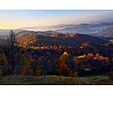 Herbstwald, Goldener Oktober