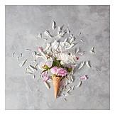 Blossom, Petals, Peony, Summer
