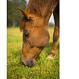 Pferd, Grasen