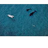 Swimmer, Killer whale