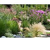 Garden, Garden plants, Perennials