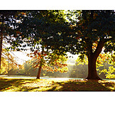 Park, Autumn, Light Incidence