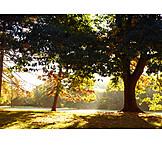 Park, Herbst, Lichteinfall