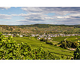 Wine, Moselle Valley, Leiwen