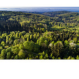 Swabian forest