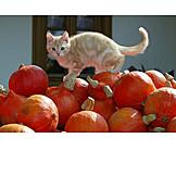 Cat, Squash