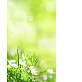 Nature, Sunlight, Spring
