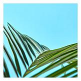 Leaf, Palm leaf