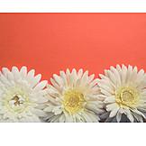Copy Space, Flower