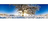 Landscape, Tree, Winter