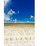 Sunflower, Crop, Outbuilding