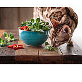 Cat, Foraging, Salad Bowl