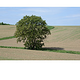 Field, Agriculture