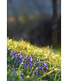 Spring, Meadow, Liverwort