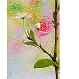 Frühjahr, Wassertropfen, Apfelblüte, Glasscheibe
