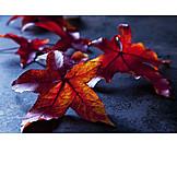 Autumn leaves, Autumn leaves, Leaves