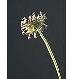 Flower, Faded