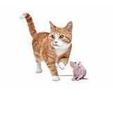 Cat, Rat