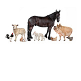 Animals, Farm