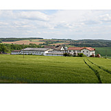 Agriculture, Farm, Corn Field