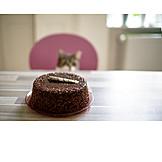 Katze, Beobachten, Torte