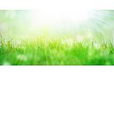 Sonnenlicht, Wiese, Frühling
