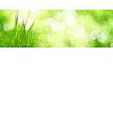 Grass, Spring, Bokeh