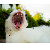 Cat, Yawning