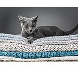 Katze, Hauskatze
