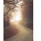 Weg, Wald, Herbst