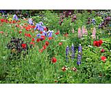 Wildblumen, Bauerngarten