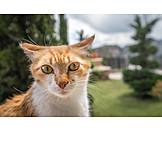 Katze, Landstreicher
