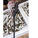 Chilled, Prepared Fish