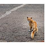 Cat, Stray