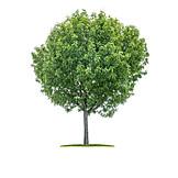 Tree, Tree, Rowan