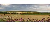 Landwirtschaft, Felder, Kulturlandschaft