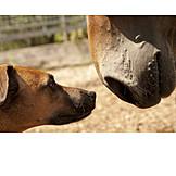 Pferd, Hund, Beschnuppern