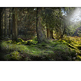 Forest, Light Incidence