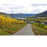 Wine, Enkirch