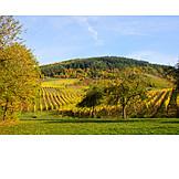 Herbstfärbung, Weinlandschaft