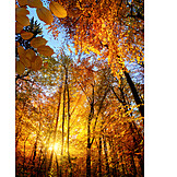 Autumn Forest, Autumn, Fall Colors