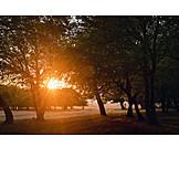 Sunset, Trees, Sunbeams