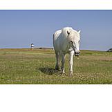 Horse, Mold