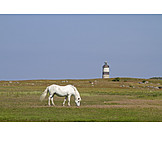 Horse, Lighthouse