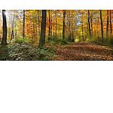 Waldweg, Herbstwald