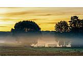 Sonnenaufgang, Landwirtschaft, Morgennebel